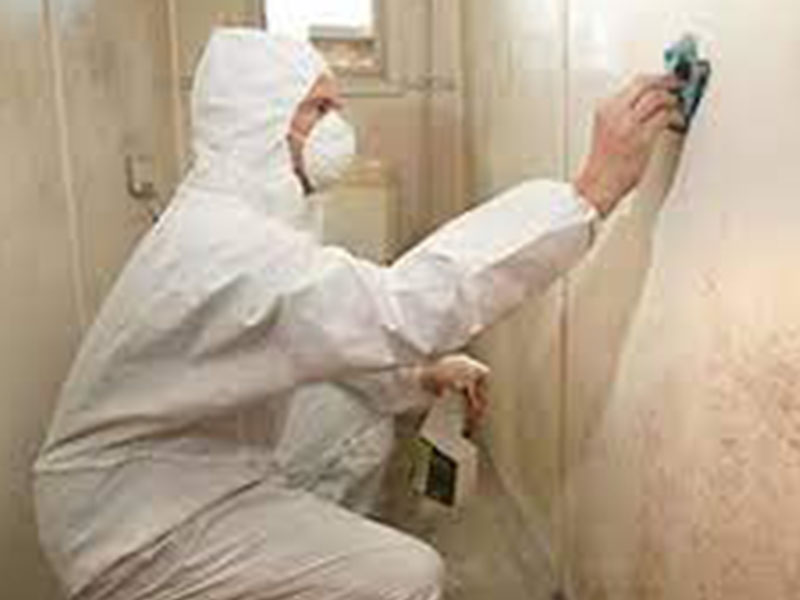 mould removal in Melbourne